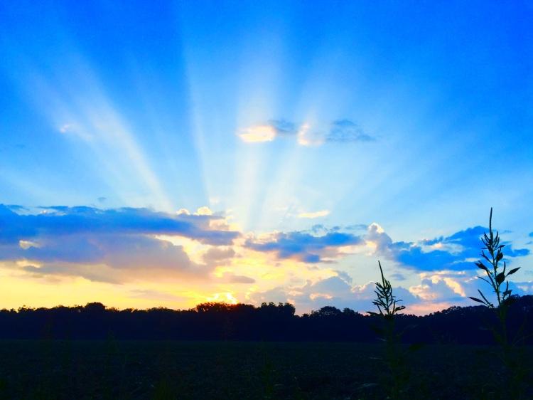 Sunrise over a Peanut Farm in Plains, Georgia